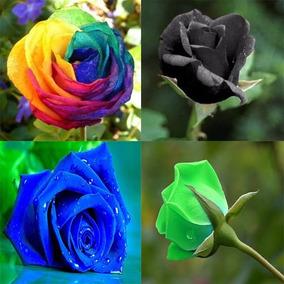 160 Sementes De Rosa Arco-iris Negra Azul Verde +brinde