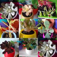 Pack X 5 Plantas Suculentas Con Macetas Autorriego Colores