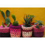 Cactus Y Crasas En Maceta Nº6 Decorada Con Funda Crochet