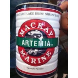 Artemia Mackay Para Eclosionar