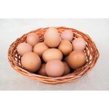 Venta De Huevos Al Por Mayor Directo De Granja