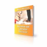 Labrador Retriever - Libro Secretos De Adiestramiento Y Cria