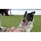 Cachorro 10 Meses Buenisimo Vital Sano En Adopcion Gratis