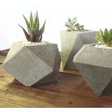 Cactus Y Suculentas En Maceta Geométrica De Cemento