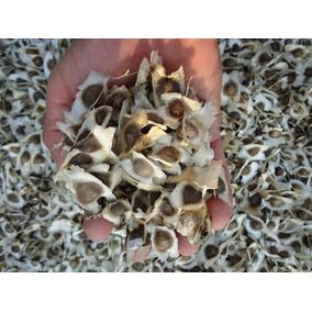 1kg Semillas Moringa Oleifera Envío Gratis Msi