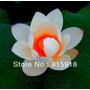 Semillas Flor De Loto Blanca Con Puntas Violetas