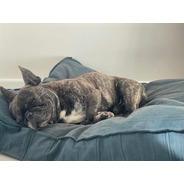 Almohadón Y Funda Tussur Para Mascotas Talle M