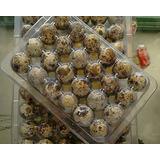 Empaque 24 Huevos De Codorniz