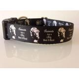 Collar Perro Marilyn Monroe