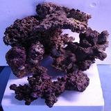 Roca Viva Acuario Marino Coralina