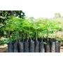 Bolsas Macetas Negras Para Plantines 1 Ltr Precio X 100