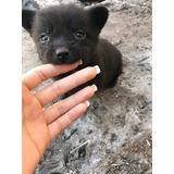 Adopción Responsable Cachorros Llevamos Al Domicilio