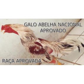 Ovos Galados Galo Índio Barrigueiro - Duzia