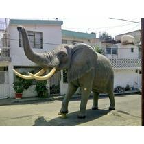 Animales Disecados 100% Artificiales. Sin Daños A La Fauna