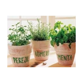 12 Plantas Aromaticas En Maceta Nro 12. San Martin!