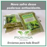 Moringa 100 Gramas Chá