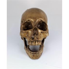 Cráneo De Humano Hecho De Resina., Calavera Tamaño Real