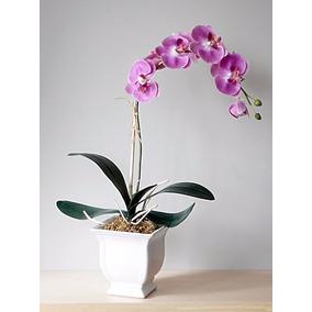 Arreglos De Orquídeas Regalo Perfecto