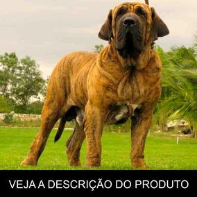 Fila Brasileiro Como Criar Seu Filhote (frete Gratis) Brinde