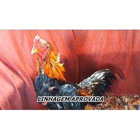 Ovos Galados Galo Índio Barrigueiro - ( 2 Dúzias )