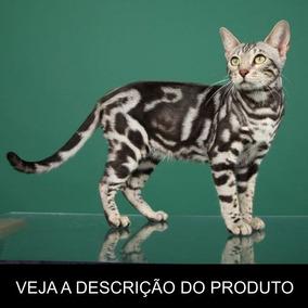 Gato Bengal - Tudo Sobre A Raça (frete Grátis) Promoção!