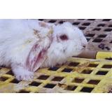 Baño Sarnicida Para Conejos