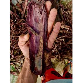 Jurema Preta (mimosa Hostilis)