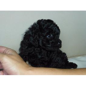 Cachorro Negro Microtoy