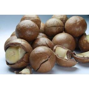 Castanha Macadamia C/ Casca 1kg