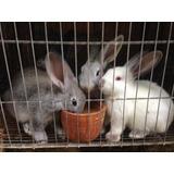 Conejos Pie De Cría Pdf Excelente Genética Y Accesoria