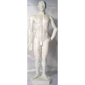 Modelo Humano Acupuntura, Altura 20