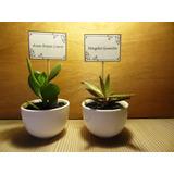 Recuerdos Cactus Suculentas+elegante Cerámica+mensaje Regalo