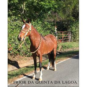 Cavalo Campolina De Excelente Papel