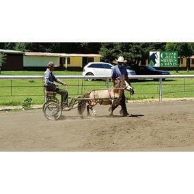 Yegua Miniatura Baya - Jala Carreta - Mini Pony