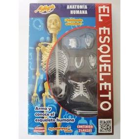Esqueleto Humano - Juguete Didáctico Para Armar - Mi Alegria