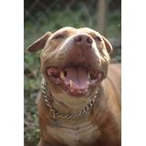 Perro En Adopcion Murphy