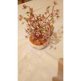 Bonsai De Flor De Jacaranda.