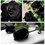 Black Rose (10 Semillas)