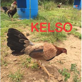 Gallos De Pelea, Aves Gallinas Para Cria (2 X 1800!!!)