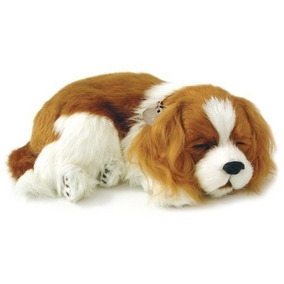 Cão Perfect Petzzz Cavalier King Respira Pelúcia Dormindo