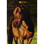 Pintura De Cavalo Óleo Sobre Tela Original - Hiper Realista