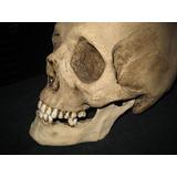 Calavera Humana, Réplica, Cráneo De Resina, San La Muerte