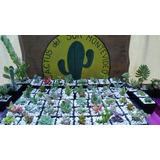 Tunas Cactus Crasas Ideales Para Souvenirs