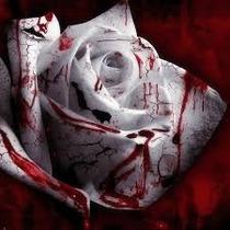 100 Sementes De Rosa Sangue - Frete Grátis