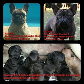 Vendo Lindos Filhotes De Bulldog Francês Linhagem De Campeão