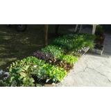 Plantines Para Huerta Por Docena