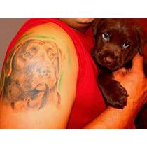 Hermosos Cachorros E Labrador Chocolates Calquin