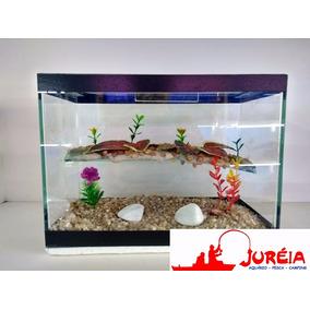 Aquario Terrario Para Tartaruga Tam. Pequeno