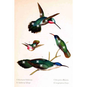 Lienzo Tela Aves De México Colibries 4 1875 80 X 50 Cm Arte