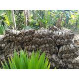 Palma Para Cabañas Kioskos Restaurante Tropicales